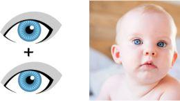 Augenfarbe beim Baby vorhersagen